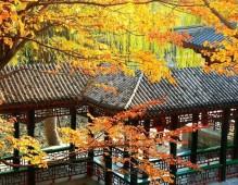 颐和园深秋彩叶映古建 (5)