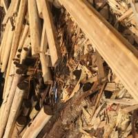 长期销售优质古建筑杉原木、原生杉原木、杉锯材、特材、大杉木(可开增值税发票)